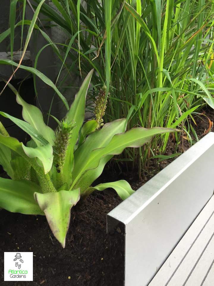Modern Garden Borders | Atlanitca Gardens Stainless Steel Modern Lawn Edging
