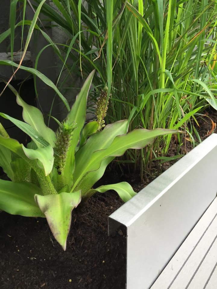 Modern garden borders bedding and edging for lawn - Garden metal edging strip ...